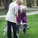 blessing over dog